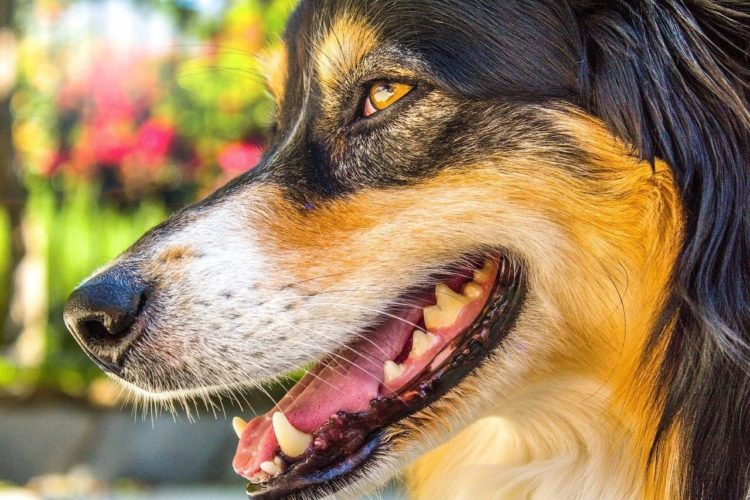 5 Ways To Be a Great Dog Owner